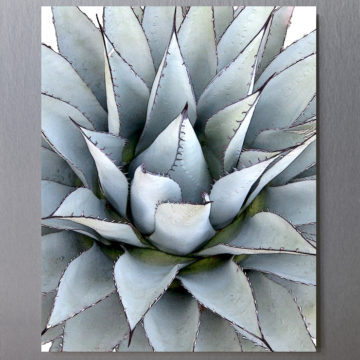 Agave Again Framed