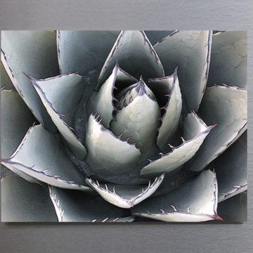 Agave Flower Framed