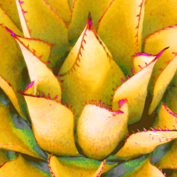 Agave Lotus Yellow II