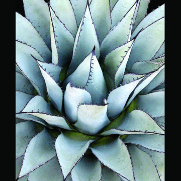 Agave Star Black Framed
