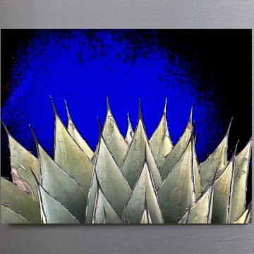 Agave in Spotlight Framed