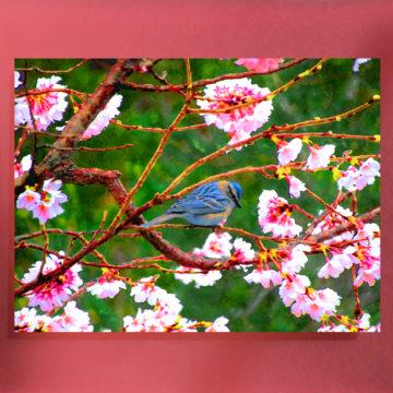 Blue Marauder Framed Sassy