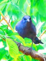 Blue Raven 2