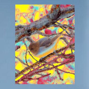 Chameleon Framed