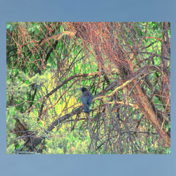 Crows Hallow Framed