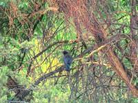 Crows Hideaway