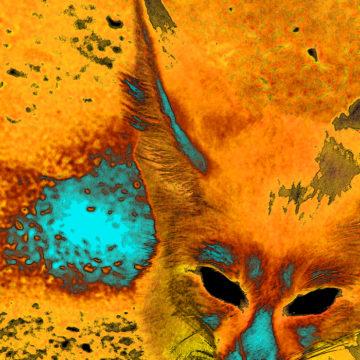 Foxy Turq