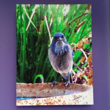 Grey Bird 10