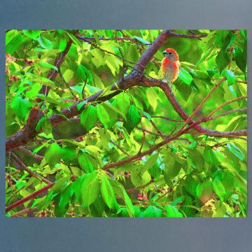 Red Spring Framed