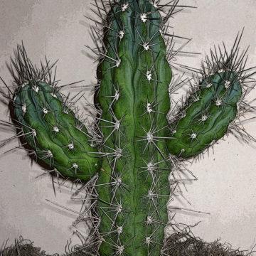 Saguaro Perfection