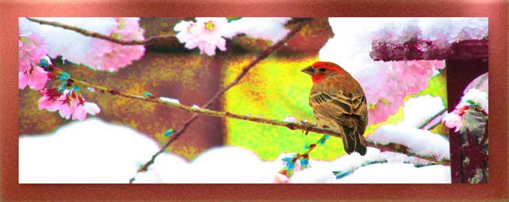 Winter Cherry Framed