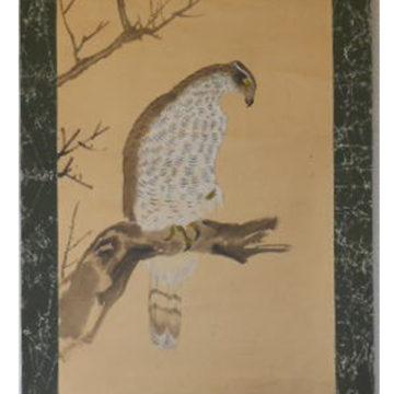 Hawk-GUJO