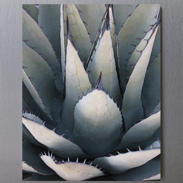 Agave Lotus Framed